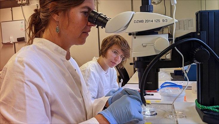 Dr. Anne-Nina Lörz und Kollegin im Labor auf dem Schiff