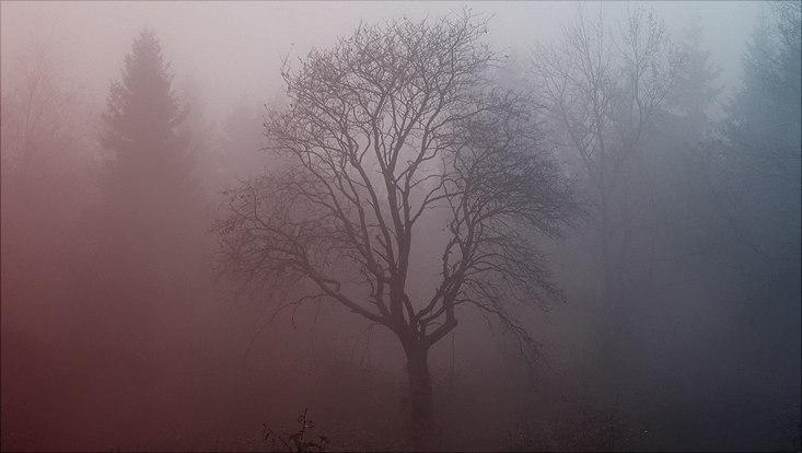 Auf dem Bild ist ein Baum ohne Blätter, mit herabhängenden Ästen, im Nebel zu sehen.