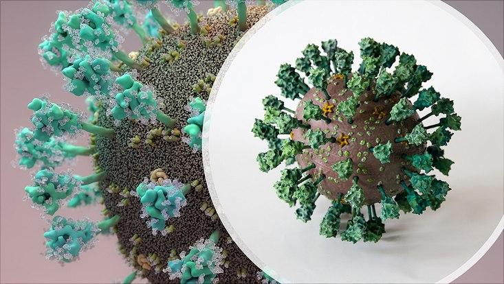 Model of the coronavirus developed by Dr. Andrea Thorn