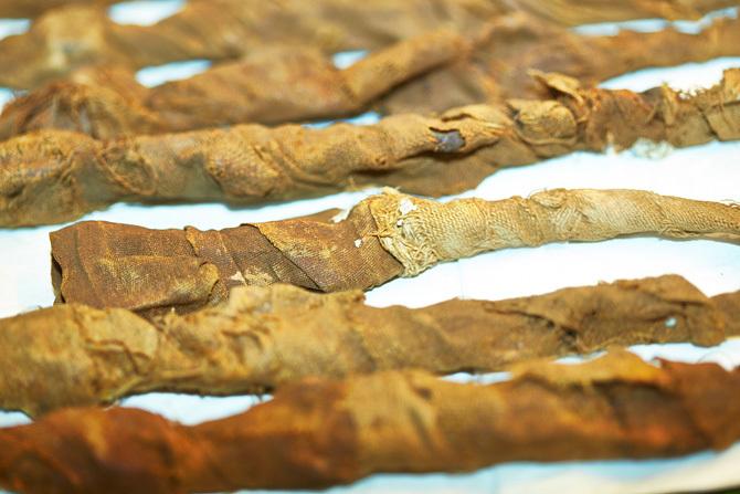 2000 Jahre alte mumifizierte Krokodile
