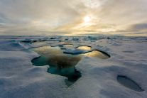 Pools of melted ice on Arctic sea ice