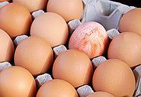 Eine Palette mit Hühnereiern