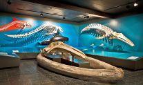 Blick in die Schausammlung des Zoologischen Museums