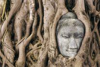 In einen Baum eingewachsener Buddhakopf aus Ayutthaya