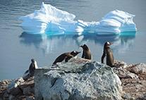 Eisberg und Pinguine in der Antarktis