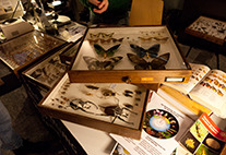 Insect specimens in glass showcases.