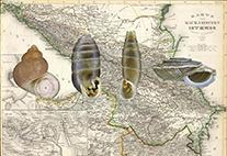 Biogeografie der Landschnecken