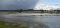 Hochwasser in der Auenlandschaft an der Mittelelbe
