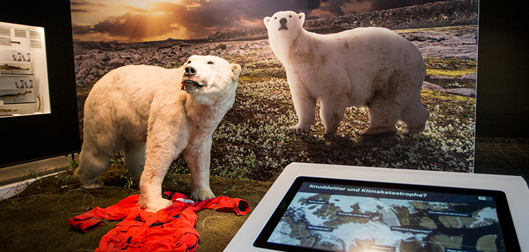 Polar bear in the new exhibition space at CeNak