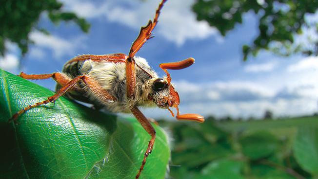 """Ein Käfer als Symbol für das Aktionswochenende """"Natur in der Stadt"""""""
