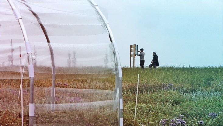 Wissenschaftler/innen installieren Gewächshäuser auf den Salzwiesen