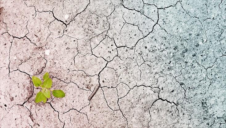 Ansicht der trockenen Erde einer Wüste mit einer kleinen grünen Pflanze