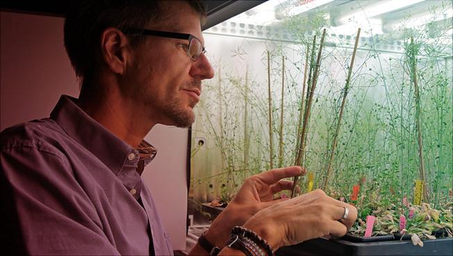 Prof. Dr. Arp Schnittger vor einem Kulturschrank mit Exemplaren der Ackerschmalwand