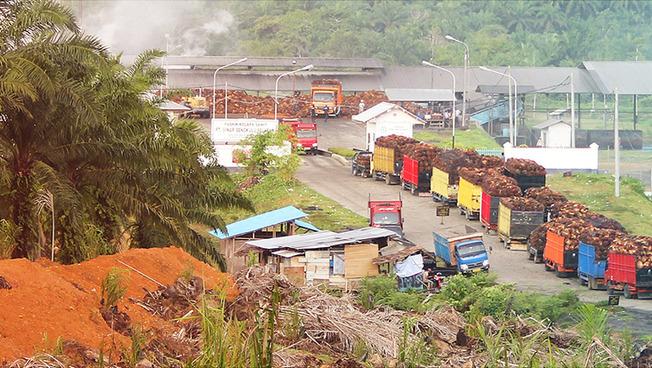 Holztransport mit LKW in Sumatra