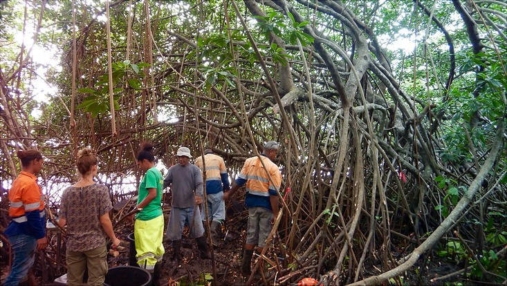 Mangroven-Inventur auf Fidschi
