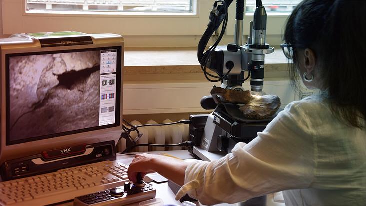Knochen wird mit Digitalmikroskopie untersucht