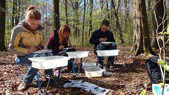 Mitglieder des Forschungsteams im Wald