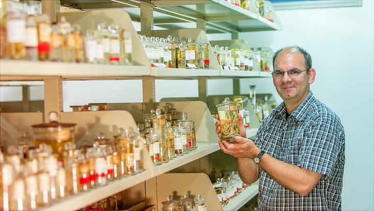 Prof. Dr. Andreas Schmidt-Rhaesa in der wissenschaftlichen Sammlung