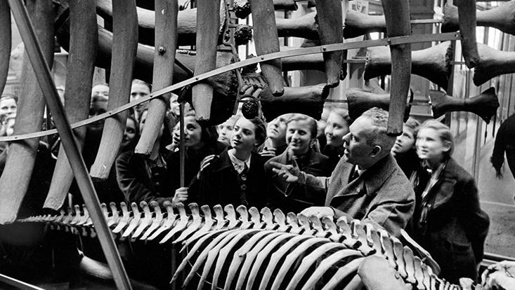 Ansichten aus dem Naturkundemuseum, das 1943 zerstört wurde
