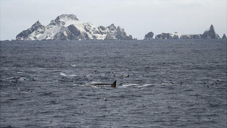 Eine Ansammlung von Walen