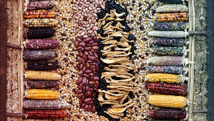 Früchte und Samen aus Nordamerika