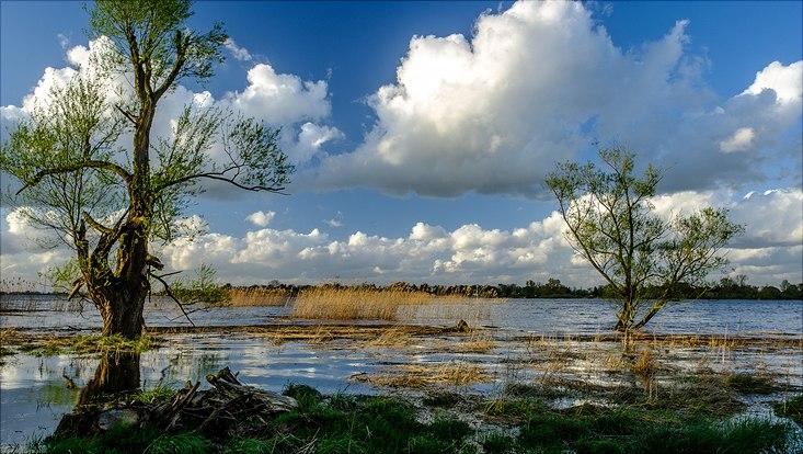 Überfluteter Auenwald am Ufer der Tideelbe.