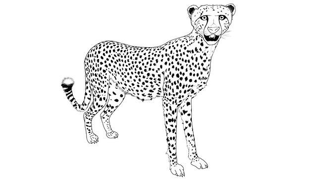 Ausmalbild: Gepard