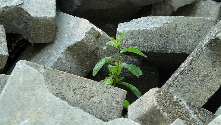 Eine grüne Pflanze wächst aus einem Haufen grauer Steinbrocken heraus.
