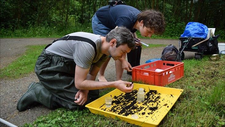 """Projektleiter und Insektenkundler Martin Kubiak (Foto) hatte sich zusammen mit einer Gruppe Studierender (hier Hannah Herrmann) und Bürgerwissenschaftler in der Park- und Grünanlage """"Obere Bille""""auf Artensuche gemacht. Ziel war eine Bestandsaufnahme"""