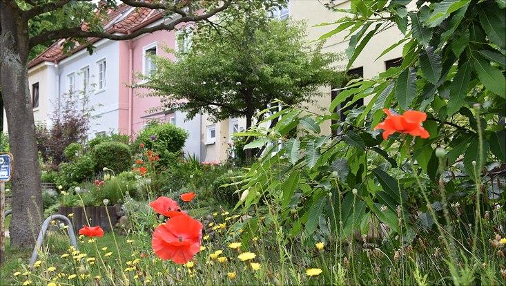 In den verwunschenen Gärten der 100 Jahre alten Steenkampsiedlung in Hamburg-Bahrenfeld fanden die Tier- und Pflanzenspezialisten eine Vielzahl an Arten. Die Daten, die hier bei der Arteninventur in 19 Gärten gesammelt wurden, liefern einen ersten Ei
