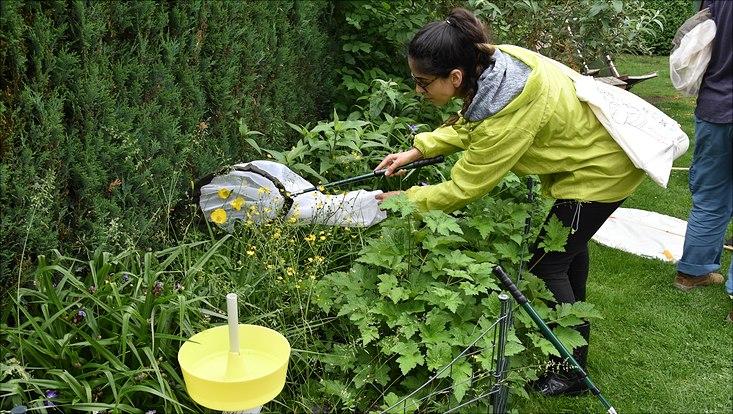Eine Monitoring-Exkursion führte die Wissenschaftlerinnen und Wissenschaftler, hier Masterstudentin Didem Friedrich, zur Arteninventur in 19 Gärten der Steenkampsiedlung in Bahrenfeld, die zum Teil mehr als 100 Jahre alt sind.