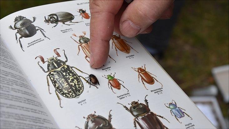 Studierende erweitern auf der Exkursion mit Wissenschaftlerinnen und Wissenschaftlern ihr Artenwissen.