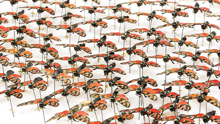 Sammlung Entomologie