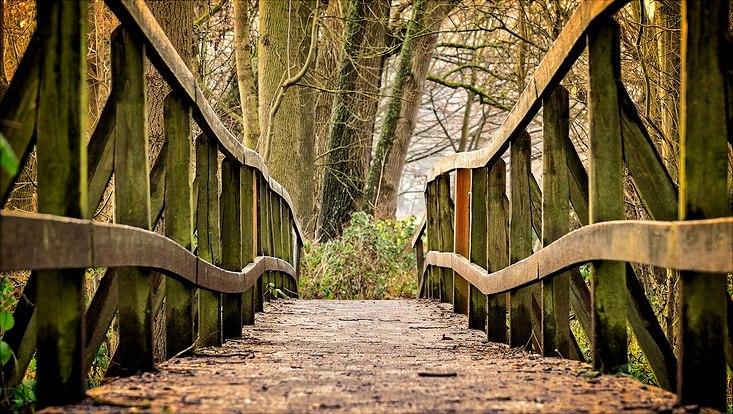 Eine Brücke aus Holz in einem Wald