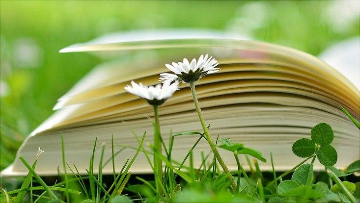 Auf einer Wiese liegt ein aufgschlagenes Buch, davor wachsen zwei Gänseblümchen.