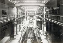 Altes Naturkundemuseum