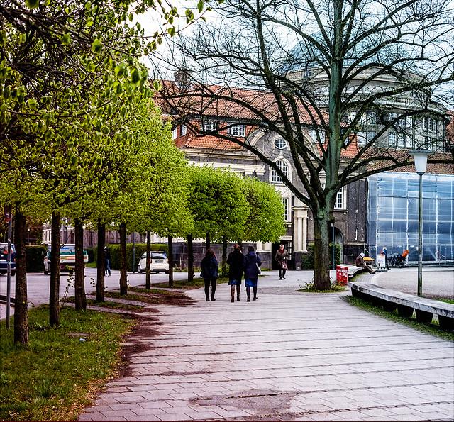 Bäume am Platz hinter dem Hauptgebäude