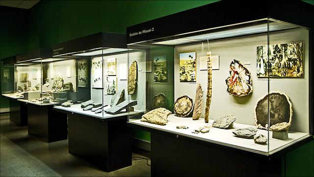Geologisch-Paläontologisches Museum