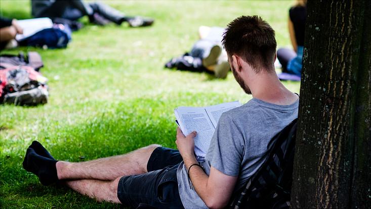 Student liest unter Baum