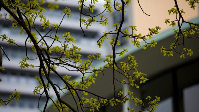 Blätter vor verschwommenem Hintergrund (Audimax, PhilTurm)