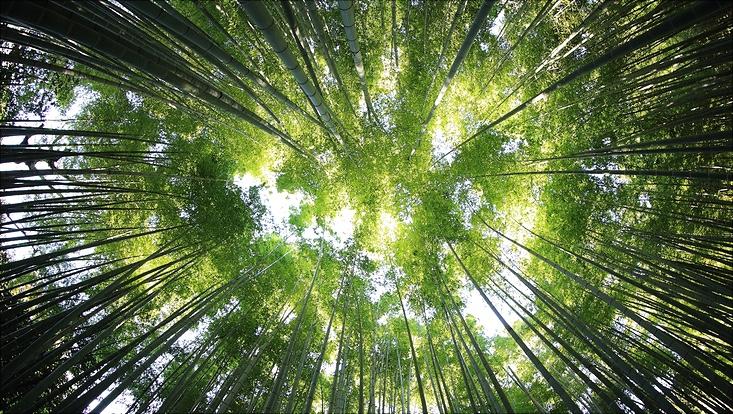 Baumkronen vom Boden aus nach oben gegen die Sonne fotografiert