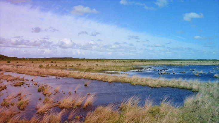 Foto von einer Sumpflandschaft zur Sommerzeit.