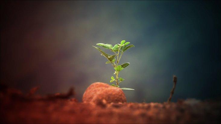 Eine kleine grüne Pflanze wächst aus dem Boden.