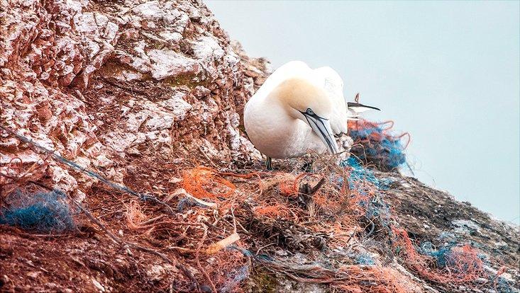 Ein Vogel stochert mit seinem Schnabel in alten Fischernetzen herum.