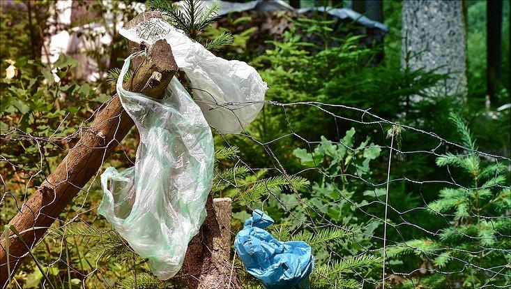 Drei leere Plastiktüten haben sich in den Ästen von Bäumen verfangen.