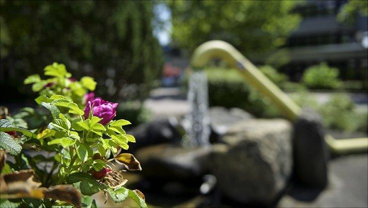 Heckenrose mit Wasserfontäne im Hintergrund