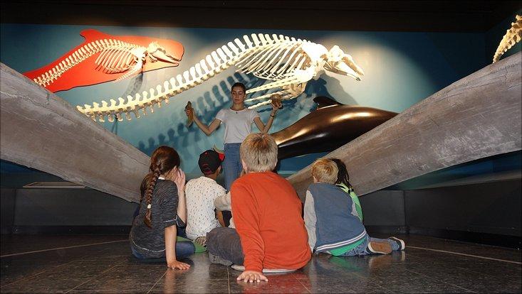 Schülerinnen und Schüler der Grundschule St. Pauli hören zu, was ihnen die Museumspädagogin über Blauwale erzählt.
