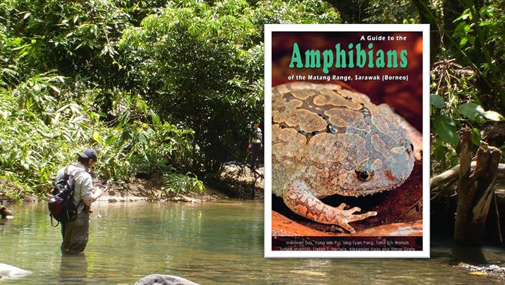 Amphibians of the Matang Range