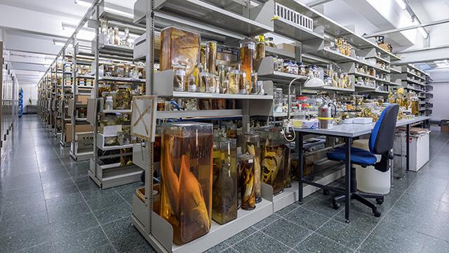 Ichthyologie Sammlung