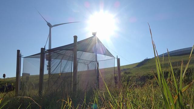 Insektenmonitoring Energieberg